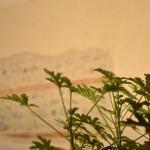 DSC_0070 thumbnail