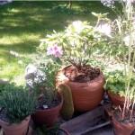 pots jardin thumbnail